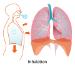 ראיות כתמונת המחשה למחלות במערכת הנשימה