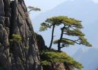 נוף סיני: מקור ההשראה של הרפואה הסינית