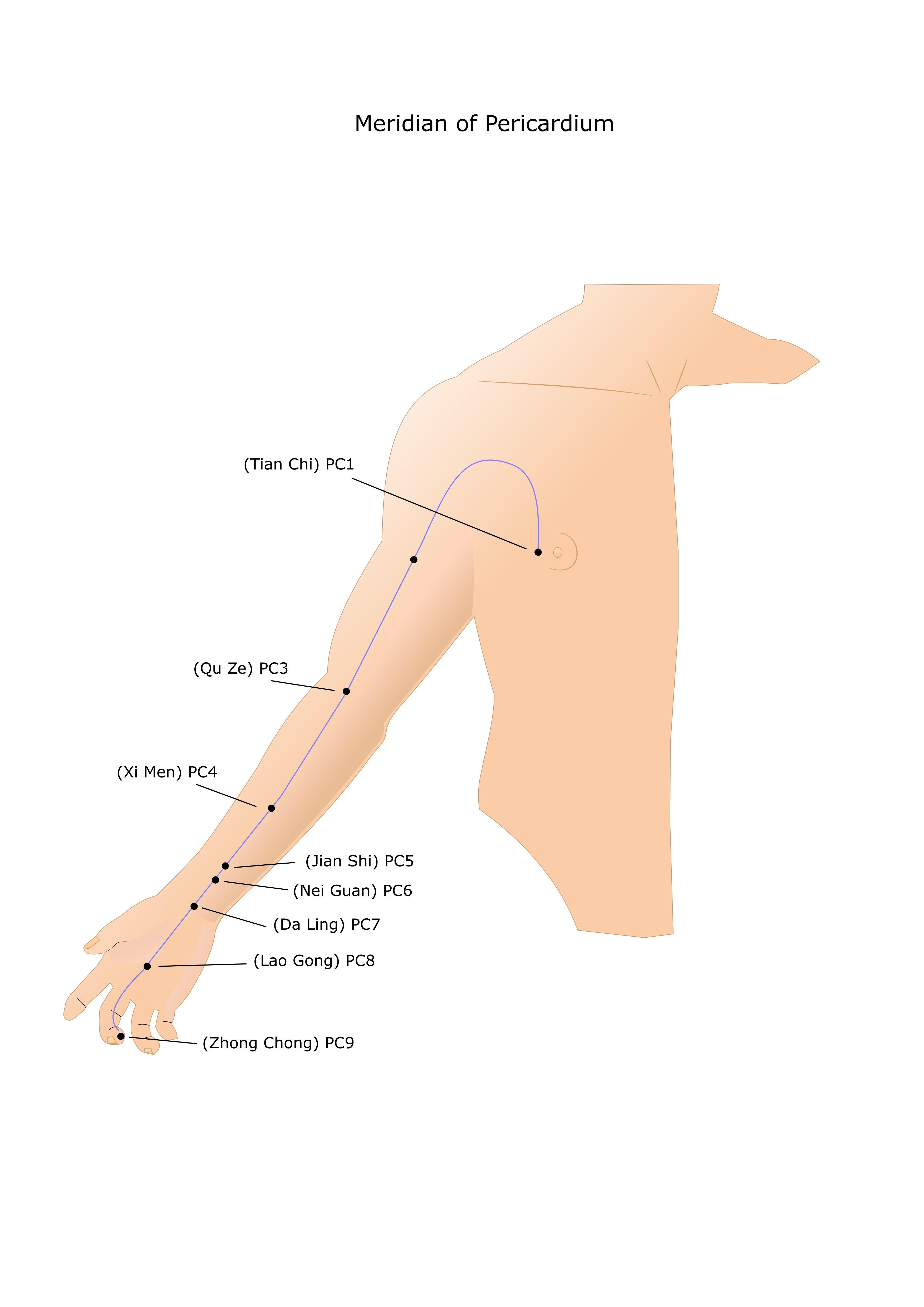 מרידיאן מעטפת הלב Pericardium Meridian