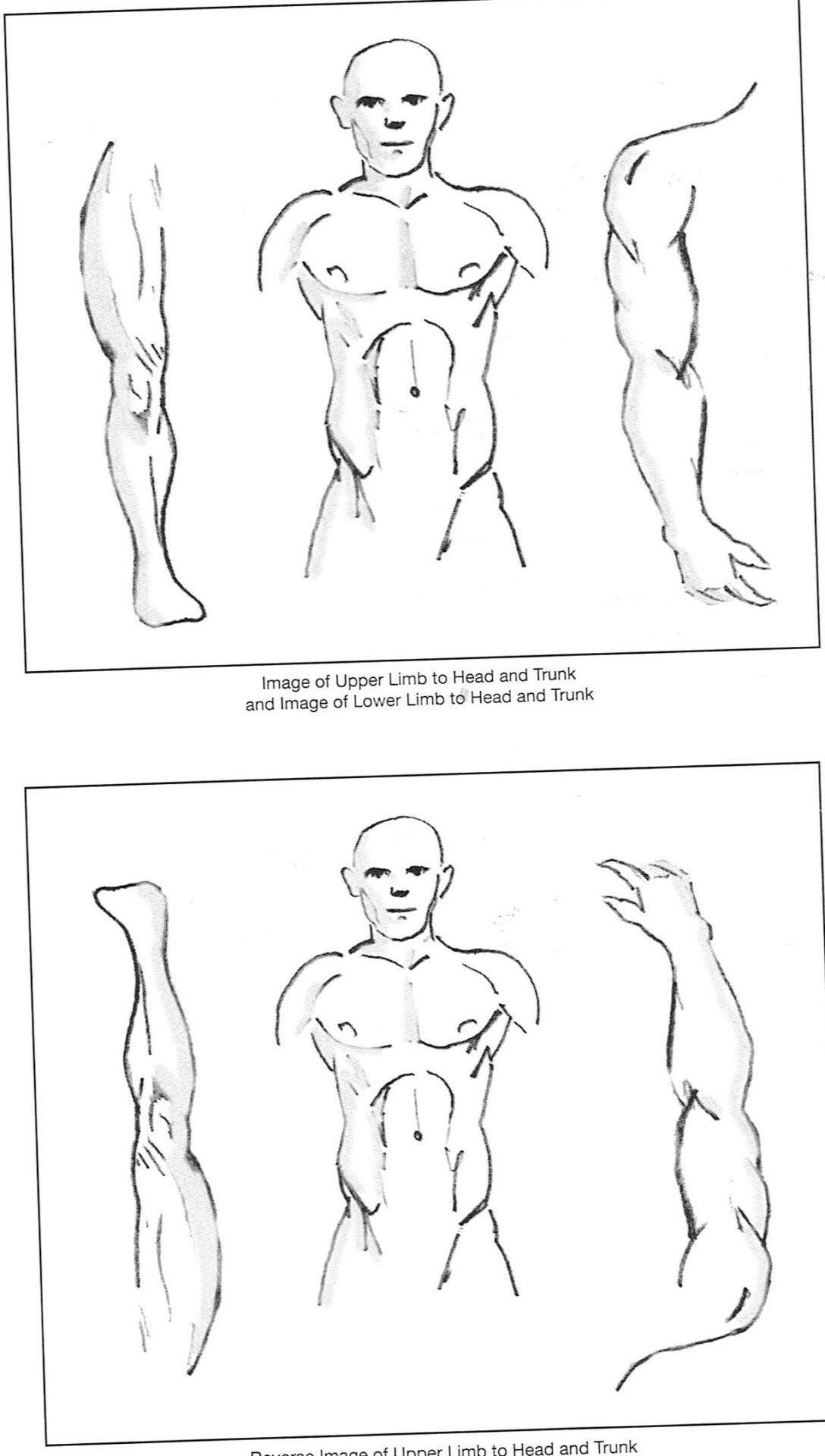 """הדמייה של איזור הבטן והחזה על הידיים והרגליים בשיטת הדיקור של ד""""ר ריצ'ארד טאן"""
