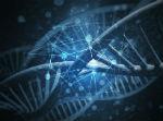 סליל DNA