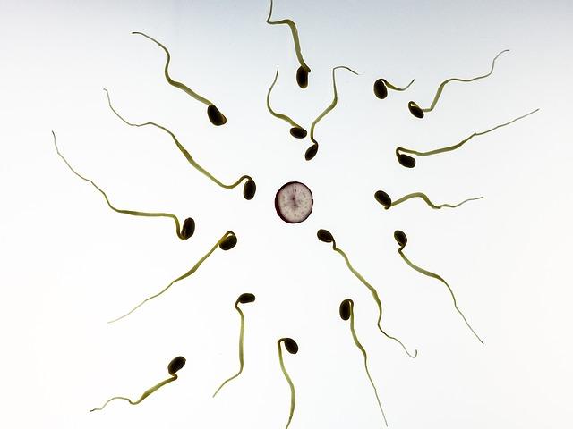 זרעונים סביב ביצית